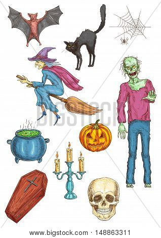 Halloween walking undead zombie, witch flying on broom, vampire coffin, pumpkin, cauldron potion, candle stick, skull, black hag cat, spider web, bat. Halloween elements for posters, cards banners