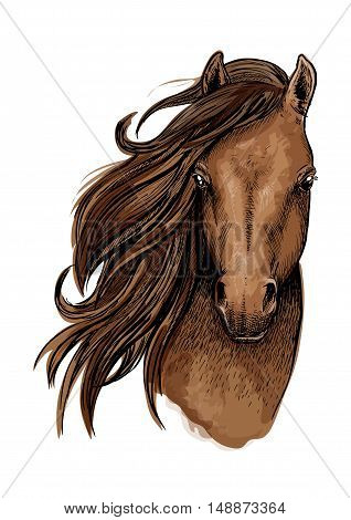 Brown horse artistic portrait. Beautiful mustang with long mane waving aside and looking straight forward