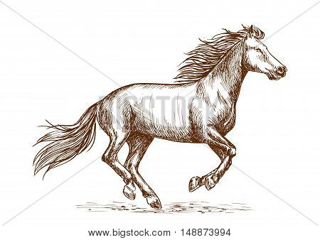 White horse running gallop portrait. Vector thin line sketch of mustang stallion freely runs against wind with waving mane and tail