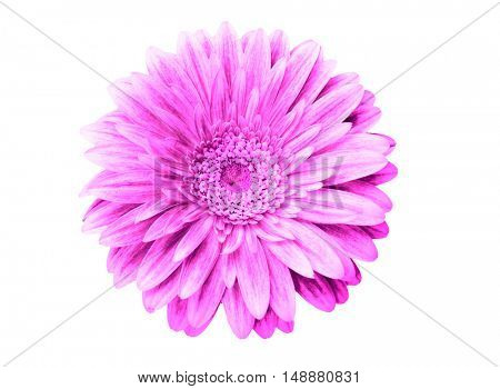 Blue flower head isolated on a white background