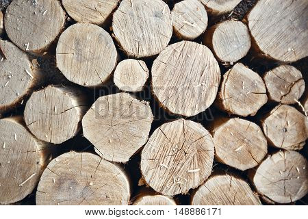Round teak wood stump background. Selective focus of Various size teak wood logs. Tree stumps background. Ecologically clean floor or wall decoration of the tree stumps. Floor made with round log wood