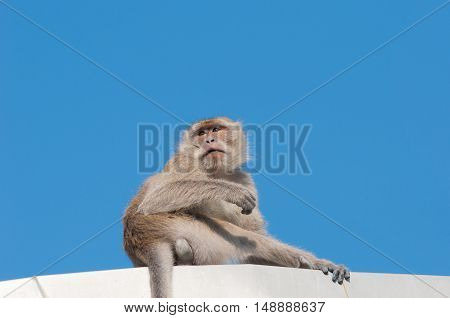 monkey with blue sky background . .