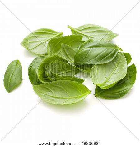 Sweet basil herb leaves handful isolated on white background closeup