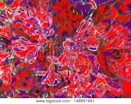 Abstract bouquet of lilies bright red to pink