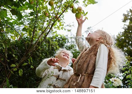 Two girls during apple harvest in the fall