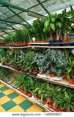 Beautiful plants in pots