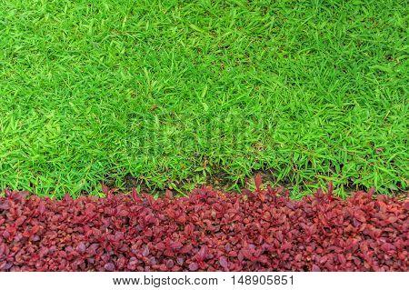 green grass vector pattern. Grass pattern, lawn grass, green grass nature