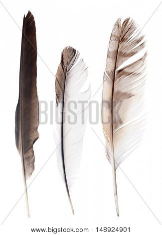 three straight feathers isolated on white background