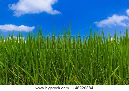 Grass and cloudy sky - abstract nature background