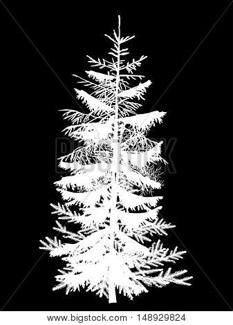 illustration with fir tree isolated on black background