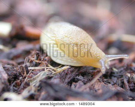 a macro shot of a slug crawling along the ground poster