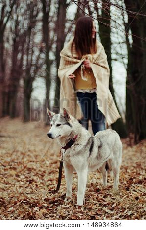 Girl In The Park Their Home With A Dog Husky. The Girl With The Siberian Husky. Delightful Girl Play