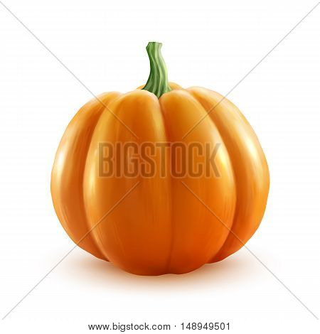 Bright orange vector realistic pumpkin isolated on white background