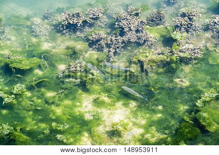 sunny illuminated riparian scenery including some waterplants and fishes