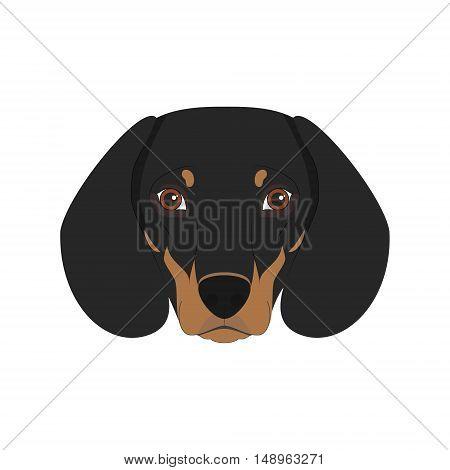 Dachshund Dog Isolated On White Background Vector Illustration