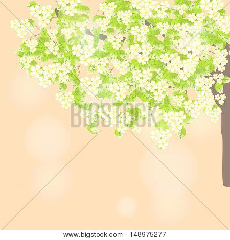 Branch of a blossoming tree. Spring leaves light background
