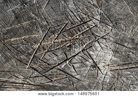 Texture Of Tree Stump