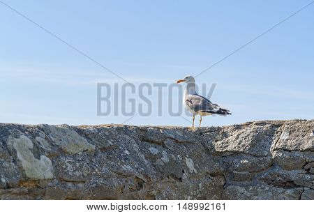 sunny scenery including a sea gull resting on a stone wall