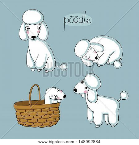 Set of cute poodle illustration in different poses. Portrait of a dog for decoration and design. Hand drawing isolated objects. Vector illustration. Cute puppy.