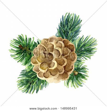 Christmas design element with fir branches and cone. Watercolor illustration