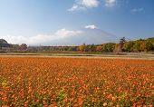 Field of cosmos flowers and Mountain Fuji in autumn season at Yamanakako Hanano Miyako Koen poster