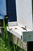 bee home at meadow with flowers and fresh green grass on spring season poster