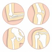 Set of human joints, elbow, knee joint, hip and shoulder joint, skeletal bone structure. Emblem anatomy and orthopedic sign for medical diagnostic center, vector illustration. poster