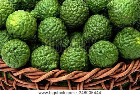 Kaffir Lime, Citrus Hystrix In Wicker Basket, For Herbal Medicine
