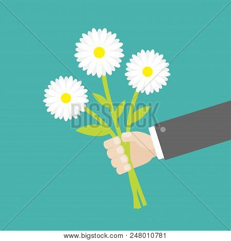 Businessman Hand Holding Bouquet Of White Daisy Chamomile Marguerite Camomile Flowers. Flat Design.