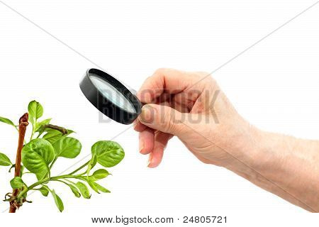 Hand With Loupe
