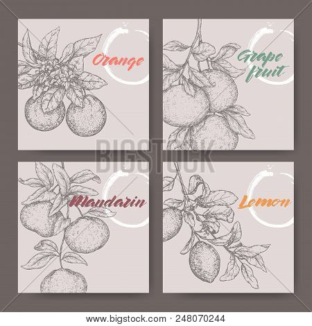 Four Labels With Orange, Lemon, Mandarin And Grapefruit Sketch. Great For Farming, Garden, Store And