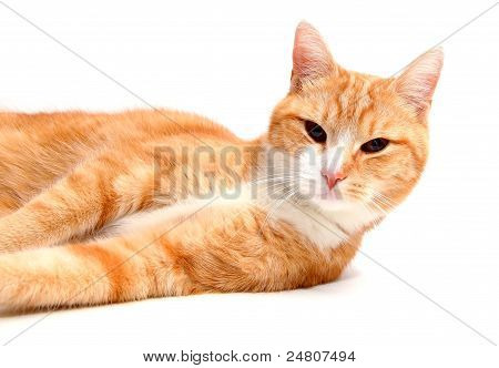 relaxed tomcat