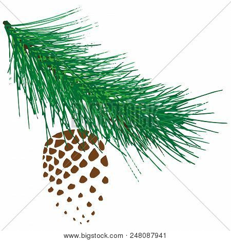 Coniferous Branch With Cones. Vector Of A Branch Of Spruce With Cones. Cones On Branches.