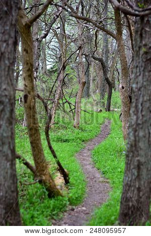 A Narrow Dirt Path Running Through A Missouri Forest On An Early Spring Day.