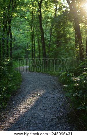 A Gravel Trail Winding Through A Missouri Forest Late In The Afternoon.