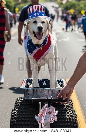 White Labrador Wearing American Red, White, And Blue Hat And Bandana While Riding On Large Wagon In