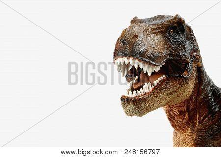 Brown Tyrannosaurus Rex (t-rex,  Coelurosaurian Theropod Dinosaur) Didactic Figure Showing Head With