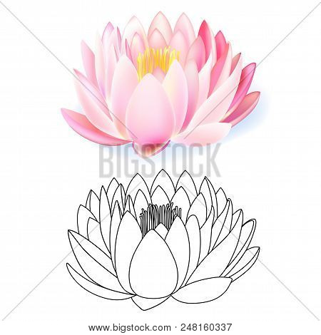 Pink Lotus Pattern Flower Set Isolated On White Background (vector Illustration)