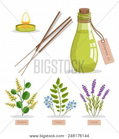 Sandalwood And Olibanum, Set Of Herbs And Bottle With Essence, Candle And Tag, Herbs And Titles Vect