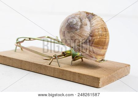 Mousetrap And Empty Damaged Snail Shell. The Developer's Trap Is Figuratively.