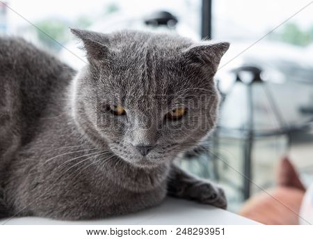 Cat Relaxing On The Couch In Colorful Blur Background, Cute Funny Cat Close Up, Elaxing Cat, Cat Res