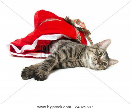 Cute tabby cat laying down inside of red Christmas bag on white background poster