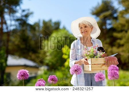 gardening and people concept - senior woman or gardener with garden tools and flowers in wooden box at summer
