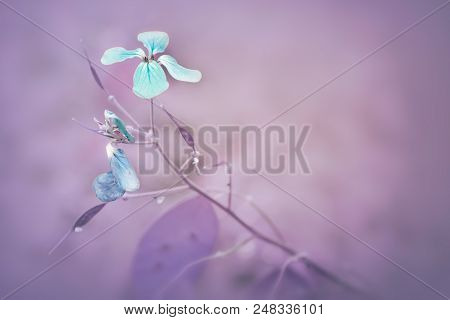 Blue And Purple Flower Background Image. Wild Blue Flowers On Purple Background. Close Up Of Blue Co