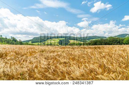 Windy Wheat Field On A Summer Day, Landscape