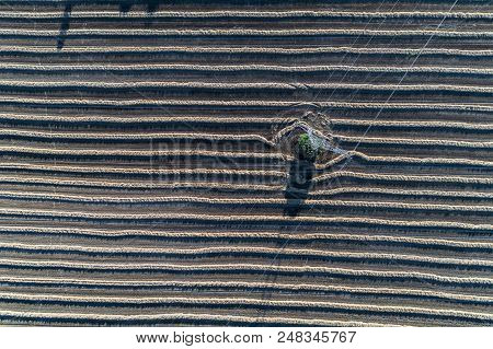 Aerial view on the powerline on the field with rows poster