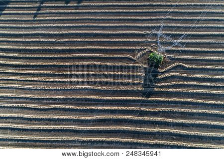 Aerial View On The Powerline On The Field With Rows