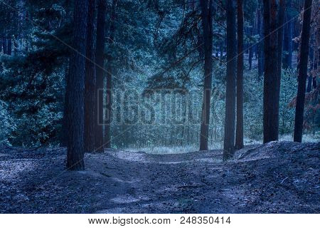 Glow In The Mysterious Night Forest With High Pine Trees Breathtaking Wilderness Beauty Of Wildlife