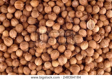Coriander Seeds (coriandrum Sativum) Background, Copy Space. Healthy And Vegetarian Food, Dieting Co