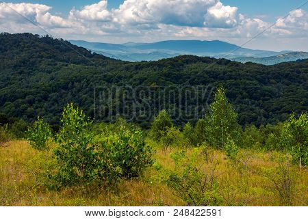 Trees On Grassy Meadow In Mountains. Mountain Ridge In The Distance. Lovely Summer Scenery